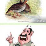 Pet Pheasant and Fowler